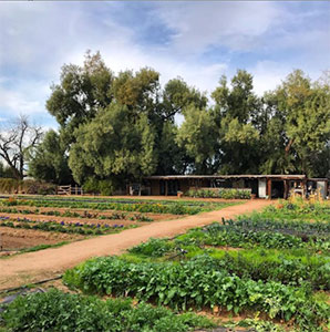 Organic desert farming at South Mountain Phoenix for healthy organic restaurant