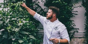 Chef caring for onsite organic fruit trees for healthy organic menu